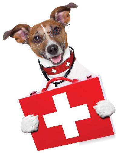 Tierarzt Mannheim Tierarztpraxis Fuchs Erste Hilfe Kurs Hund