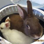 Tierarzt_Mannheim_003