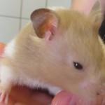 Tierarzt_Mannheim_005