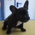 Tierarzt_Mannheim_006