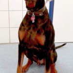 Tierarzt_Mannheim_Hund_Behandlungszimmer_Feb_2016