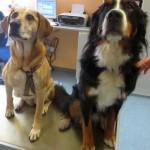 Tierarzt_Mannheim_Patient_001