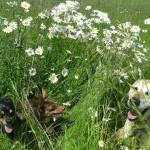 Tierarzt_Mannheim_Praxis_Dr_Annette_Fuchs_Gartenstadt_001
