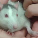 Tierarzt_Mannheim_Praxis_Dr_Annette_Fuchs_Gartenstadt_002