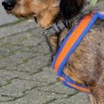 Tierarzt_Mannheim_Praxis_Dr_Annette_Fuchs_Gartenstadt_006