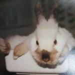 Tierarzt_Mannheim_Praxis_Dr_Annette_Fuchs_Gartenstadt_007