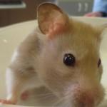 Tierarzt_Mannheim_Praxis_Dr_Annette_Fuchs_Gartenstadt_011