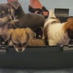 Tierarzt_Mannheim_Praxis_Dr_Annette_Fuchs_Gartenstadt_018