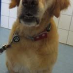 Tierarzt_Mannheim_Praxis_Dr_Annette_Fuchs_Gartenstadt_027