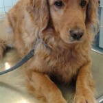 Tierarzt_Mannheim_Praxis_Dr_Annette_Fuchs_Gartenstadt_032