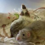 Tierarzt_Mannheim_Praxis_Dr_Annette_Fuchs_Gartenstadt_0914_011