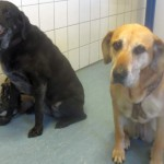 Tierarzt_Mannheim_Praxis_Dr_Annette_Fuchs_Gartenstadt_0914_016