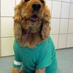 Tierarzt_Mannheim_Praxis_Dr_Annette_Fuchs_Gartenstadt_15032015_007