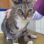 Tierarzt_Praxis_Fuchs_Mannheim_Gartenstadt_005