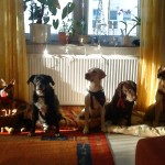 Tierarzt_Praxis_Fuchs_Mannheim_Gartenstadt_018