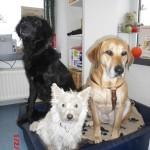 Tierarzt_Praxis_Fuchs_Mannheim_Gartenstadt_023