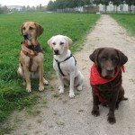 Tierarztpraxis-Dr-Fuchs-Mannheim-Gartenstadt-Kleintier-Drei-Hunde(1)
