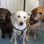Tierarztpraxis-Fuchs-Mannheim-Gartenstadt-Kleintier-Drei-Hunde (1)