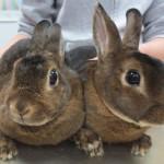 Tierarztpraxis-Fuchs-Mannheim-Gartenstadt-Kleintier-Hase