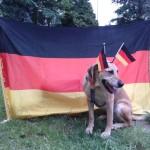 Tierarztpraxis-Fuchs-Mannheim-Gartenstadt-Kleintier-Hund (10)