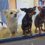Tierarztpraxis-Fuchs-Mannheim-Gartenstadt-Kleintier-Hund (17)