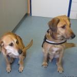 Tierarztpraxis-Fuchs-Mannheim-Gartenstadt-Kleintier-Hund (2)