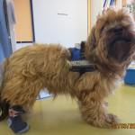 Tierarztpraxis-Fuchs-Mannheim-Gartenstadt-Kleintier-Hund (21)