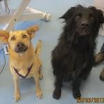 Tierarztpraxis-Fuchs-Mannheim-Gartenstadt-Kleintier-Hund (22)