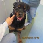 Tierarztpraxis-Fuchs-Mannheim-Gartenstadt-Kleintier-Hund (23)