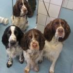 Tierarztpraxis-Fuchs-Mannheim-Gartenstadt-Kleintier-Hund (24)