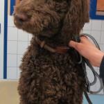 Tierarztpraxis-Fuchs-Mannheim-Gartenstadt-Kleintier-Hund (25)