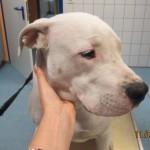 Tierarztpraxis-Fuchs-Mannheim-Gartenstadt-Kleintier-Hund (3)