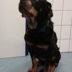 Tierarztpraxis-Fuchs-Mannheim-Gartenstadt-Kleintier-Hund (5)