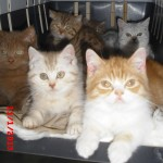 Tierarztpraxis-Fuchs-Mannheim-Gartenstadt-Kleintier-Katze (4)