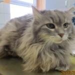 Tierarztpraxis-Fuchs-Mannheim-Gartenstadt-Kleintier-Katze (6)