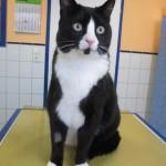 Tierarztpraxis-Fuchs-Mannheim-Gartenstadt-Kleintier-Katze (7)
